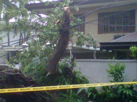typhoon tree 540x404 Two typhoons hit Manila in less than a week